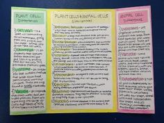 Making a Lapbook for Plant and Animal Cells - WeHaveKids - Family 7th Grade Science, Middle School Science, Elementary Science, Science Education, Science Inquiry, Montessori Science, Biology Classroom, Teaching Biology, Cell Biology