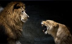 Even the King of the Jungle has days like these, where his Queen needs to roar and be heard. That is what makes for a good and wise King.
