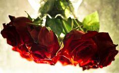 Lotuss Carrol  https://plus.google.com/photos/102476152658204495450/albums/5730902190686642017/5730902190835794322