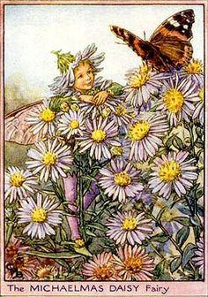 Michaelmas Daisy fairy
