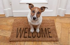 Pies – nowy domownik, nowe obowiązki - Deccoria.pl  Kliknij w zdjęcie, aby zobaczyć więcej!