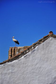 angela oeiras fotografia