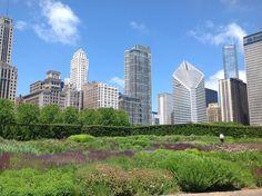 Huertos urbanos, Chicago