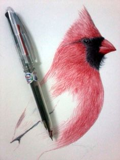 the_red_bird___ballpoint_pen___wip_by_srimant-d5d9x9j.jpg (900×1200)