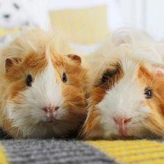 Nala, Percy & Pippin