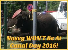 GREAT NEWS! Canal Day WON'T Host Nosey This Year!