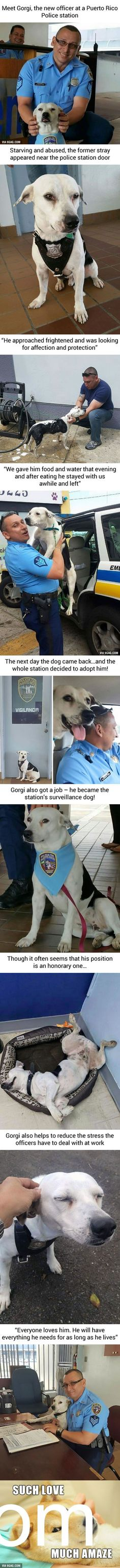 Click LIKE if you Love Dogs #PaleoPets Stray Dog Walks Into Police Station, Gets A Job - 9GAG http://9gag.com/gag/aW6zzWx?ref=mobile