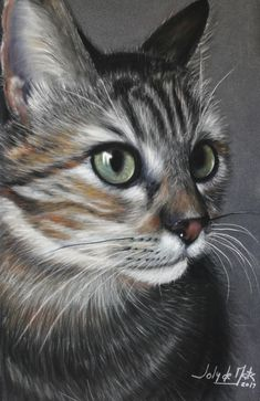 Pastel, Cats, Animals, Cake, Gatos, Animales, Animaux, Animal, Cat