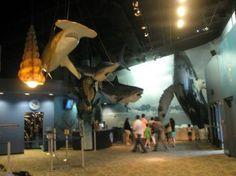 Newport Aquarium Newport Aquarium, Kentucky