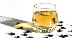Découvrez notre insecticide naturel pour débarrasser votre maison des mouches, cafards et moustiques...