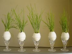 Grass In Egg Shells