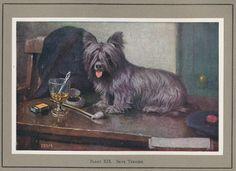 Más tamaños | Sky Terrier pl XIX | Flickr: ¡Intercambio de fotos!