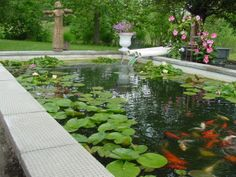 Take A Look At This Scenic Koi Pond! To Keep Your Koi Lively, Make Sure You  Provide Them With The Appropriate Feed With A Sweeney Feeders Koi Feedeu2026