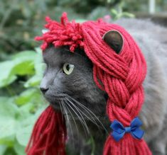 Raggedy Ann Wig - Rag Doll Yarn Wig for Cats and Small Dogs - Cat Halloween Costume - Pet Raggedy Ann Costume - Cat Photo Prop by ToScarboroughFair on Etsy https://www.etsy.com/listing/111194769/raggedy-ann-wig-rag-doll-yarn-wig-for