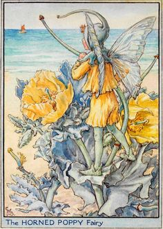The Horned Poppy - Flower Fairies