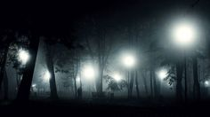 Fog in the park by Ionut Vicol on 500px