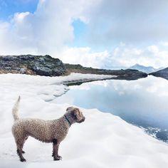 Wanderung im Glarnerland #spanischerwasserhund #hundimschnee #perro #Bergsee #wandern #perrodeagua Instagram, Spanish Water Dog, Hiking