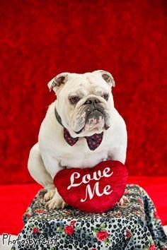 """""""Love me."""" A Valentine bulldog. (An original work from www.PhotosByFeist.com. Love it? Repin it!)"""