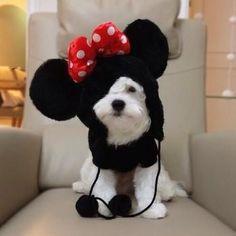 La nueva Minnie