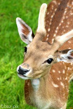 Kangaroo, Giraffe, Faces, Animals, Baby Bjorn, Felt Giraffe, Animales, Animaux, Giraffes
