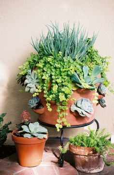 Succulents in a strawberry pot, with creeping jenny