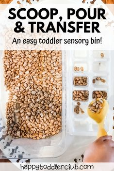 An easy sensory bin idea for toddlers and preschoolers. This engaging sensory bin provides fine motor practice through a simple scoop, pour, and transfer activity. Great indoor activity for toddlers! Engaging sensory play to keep your toddler entertained. Toddler Sensory Bins, Sensory Boxes, Toddler Preschool, Toddler Crafts, Sensory Play, Preschool Crafts, Sensory Tubs, Montessori Toddler, Baby Sensory