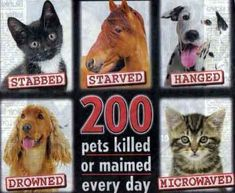 Animals killed using cruel methods such as suffocation, electrocution, gas and poison