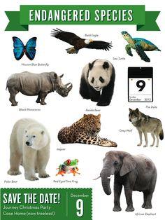 142 Best Endangered Extinct Species Images Endangered Species