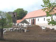 Lipica stud farm, Slovenia. Image source: Plp- wikimedia