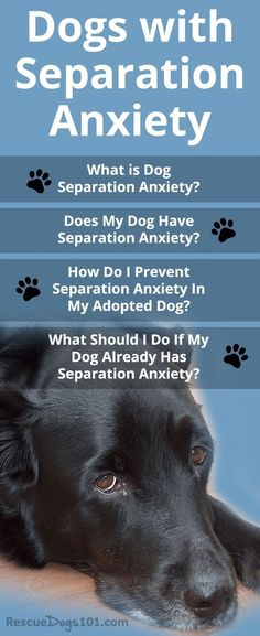 Does My Dog Have Separation Anxiety? What is Dog Separation Anxiety?