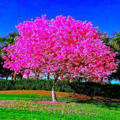 الشجرة المثمرة كلما كثرت ثمارها تمايلت وإنحنت .... كذلك الإنسان المتواضع كلما إزداد رفعة كلما إزداد قربا من الناس أما المتكبر فهو كالدخان يعلو في الفضاء ليتبدد ويزول