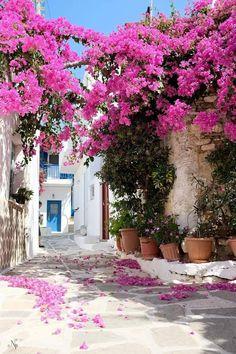 Tropical Garden, Sidewalk, Plants, Tropical Backyard, Tropical Gardens, Flora, Plant, Pavement, Curb Appeal