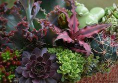 Imágenes que te inspirarán a la hora de crear bonitas composiciones con tus plantas preferidas, las suculentas. ¿Con cuál te quedas?