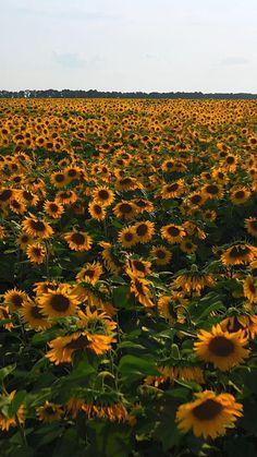 Beautiful Photos Of Nature, Beautiful Nature Wallpaper, Nature Pictures, Amazing Nature, Sunset Pictures, Aesthetic Photography Nature, Nature Aesthetic, Summer Nature Photography, Sunflower Pictures