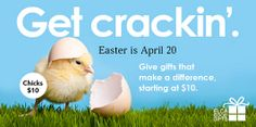 Send real chicks to families in need this Easter! ELCA Good Gifts