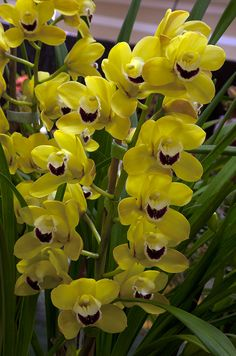 How To Keep Orchids Alive And Looking Gorgeous Orchid Flower Arrangements, Pretty Flowers, Rare Flowers, Colorful Plants, Beautiful Flowers, Fruit Plants, Orchids, Orchidaceae, Beautiful Gardens