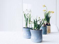 Frühling...  ... statt Kakao in meinen liebsten Keramik-Bechern  #fürmehrfarbeimhausemammilade Guten Morgen! . . Start your day right... With loads of spring in your mugs #muglove . . . #springisintheair #icanfeelit #flowers #plants #onthetable #tablesituation #spring #springtime #été #frühling #feelslikespring #tv_living #frühblüher #naturalbeauties #urbanjunglebloggers #flowerstyling #flowerblogger #flowerpowerbloggers #flowersmakemehappy #mug #tassenliebe #ceramics #kahlerdesign…