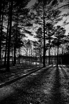 Bowers Park Shadows  Tuscaloosa, Alabama  I love all of Gods creatures especially the squalls that crawl up and down the trees!