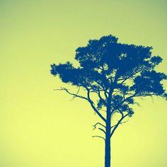 #하늘을품은나무