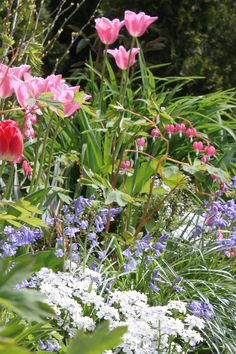 All Cottage Garden plants (bleeding heart, english bluebells, tulips, candy tuft)