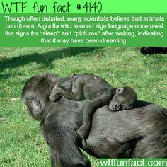 Do animals dream? -  WTF fun facts