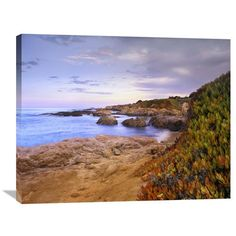 Ice Plant Growing On Cliffs At Bean Hollow Beach, California By Tim Fitzharris, 28 X 35-Inch Wall Art