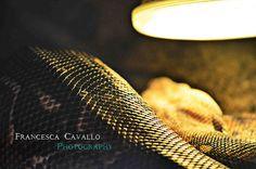 snake coils