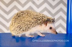 #renopetphotographer #petphotography #renonv #exoticpets #pip