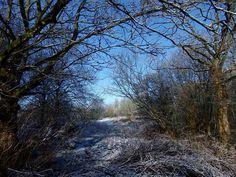 Winterwonderland..city GN.....pics by Renne &Yvonne