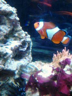 LATINA CON ESTILO ELOCUENTE: Reseña y sorteo Nemo en DVD Blue ray  hasta el 17 de diciembre.