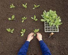 """Képtalálat a következőre: """"Tavaszi vetés"""" Plants, Plant, Planets"""