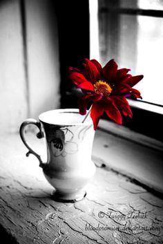 598 Best Color Splash Flowers Images Nice Asses Black White Red