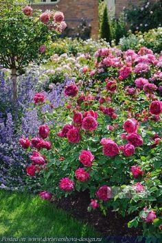 синие травы пейзажного стиля, растения, ландшафтный дизайн,синий, лиловый, сиреневый, розы