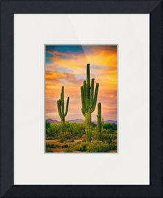 """""""Arizona Life"""" by James """"BO"""" Insogna, Boulder / Longmont - Colorado - Boulder County // Portrait scenic view of the southwest Sonoran desert in north Scottsdale with giant saguaro cactus and a beautiful colorful sunset sky.  Fine art nature landscape photography  images by James Bo Insogna (C)   - All Rights Reserved. Please feel Free to share our links, with F... // Imagekind.com -- Buy stunning fine art prints, framed prints and canvas prints directly from independent working artists and…"""